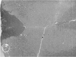 neuron-3
